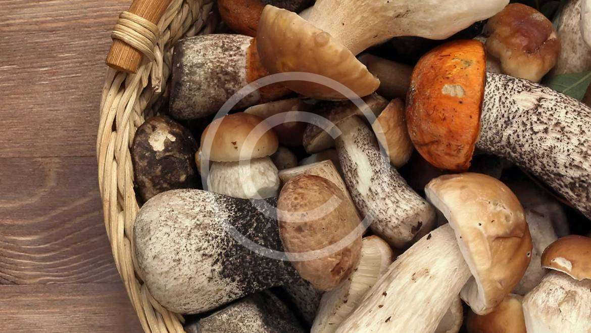 Selecting & Storing Fresh Mushrooms